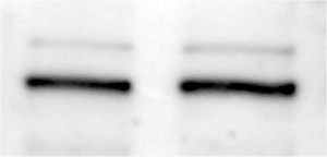 samples